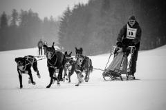 Courses de chiens de traîneau 2019