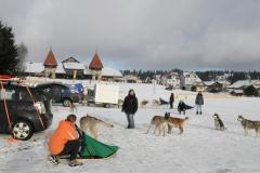Fête du chien nordique 2014